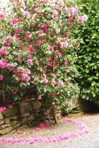 Beck Allans garden